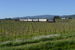 NWP in Wine Country (CN Southwell) Tags: nwp northwestern pacific mp15ac brazos hauler
