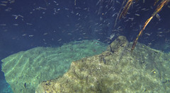 Tulum Casa Cenote aqua water cichlid fish-4