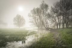 Mystic river (Bertrand Thiéfaine) Tags: marais eau rivière brume matin soleil reflets lumière arbres ombre herbe prairie souche maraisdegrée soleillevant chemin mystique nikon d750 prairieinondée