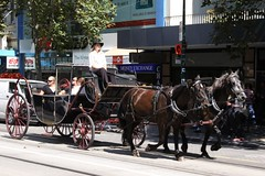 Horse drawn carriage heads north at Swanston and Collins Street (Marcus Wong from Geelong) Tags: piss shit stink smell odour horse drawn carriage touristtrap horsedrawncarriage melbourne melbournecbd
