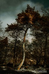 Curves in All The Right Places (OATH Photography by Alison Richards) Tags: padleygorge derbyshhire peak district landscapephotography artphotography trees vista