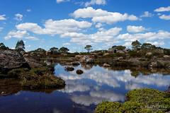20170301-39-Cloud reflections in tarn (Roger T Wong) Tags: australia greatpinetier np nationalpark sel1635z sony1635 sonya7ii sonyalpha7ii sonyfe1635mmf4zaosscarlzeissvariotessart sonyilce7m2 tasmania wha wallsofjerusalem worldheritagearea alpine bushwalk camp clouds hike landscape trektramp walk