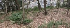 ancient burial mounds (kofun), Sabae city (anthroview) Tags: panorama canons110 stitchedpanorama fukuiken ruraljapan sabaecity sabaeshi 鯖江市 916 kofun tumulus burialmound yayoi ozan