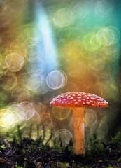 2017-01-09_05-36-42_1483988514065_1483988766673 (HelmiGloor) Tags: amanitamuscaria fliegenpilz wulstling pilz pilze wald forest