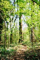 spring bokeh (_gate_) Tags: austria vienna wien frühling spring österreich prater praterhauptallee sigma 35mm art 14 nikon d750 digital green grün sommer summer april 2017 europe eu europa donau danube lobau
