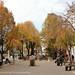 Autumn in Njegoševa street