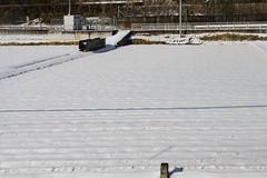 BM7Q0219.jpg (Idiot frog) Tags: winter omiya japan snow