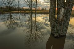 April Pond, 1, 2, 3, 4 (thefisch1) Tags: sunset pond sky horizon tree trun bark water cloud wood spring flint hills kansas nikon moon reflection reflect