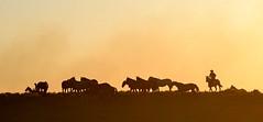 Repontando a cavalhada (Eduardo Amorim) Tags: gaúcho gaúchos gaucho gauchos cavalos caballos horses chevaux cavalli pferde caballo horse cheval cavallo pferd cavalo cavall 馬 حصان 马 лошадь crioulo criollo crioulos criollos cavalocrioulo cavaloscrioulos caballocriollo caballoscriollos pôrdosol poente entardecer poniente atardecer sunset tramonto sonnenuntergang coucherdesoleil crepúsculo anoitecer pelotas costadoce riograndedosul brésil brasil sudamérica südamerika suramérica américadosul southamerica amériquedusud americameridionale américadelsur americadelsud brazil eduardoamorim