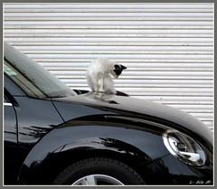 ¡¡Hala!!,...un rayón... (Luisa Gila Merino) Tags: gatos