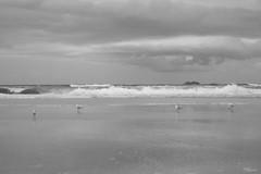 God Hates A Coward (Swebbatron) Tags: australia newsouthwales byronbay travel 2008 radlab fuji lonelyplanet beach ocean sea waves blackandwhite mono lifeofswebb