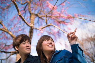 Young couple looking at cherry blossoms