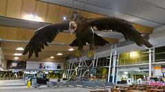 Wellington International Airport (WLG) (Mr. Kaya) Tags: wellingtoninternationalairport wlg newzealand gandalf tolkien thelordoftherings eagle