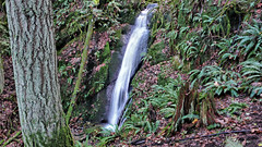 chuckanut waterfall (xtremepeaks) Tags: chuckanut waterfall wa water creek nature usa ferns rainforest hike tour wild falls misty forests