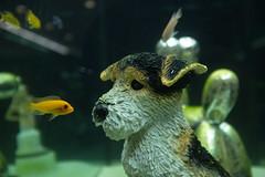 #3 - Snoopy vs. Nemo (RadarO´Reilly) Tags: fisch fish hund dog düsseldorf nrw strase street strasenfotografie streetphotography snoopy nemo