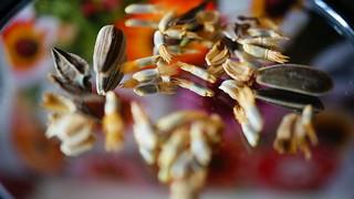 Seeds for Macro Mondays