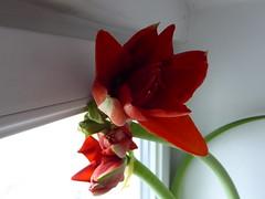 P1030446 (mjaniec) Tags: red czerwony