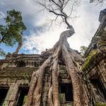 Ta Prohm Temple thumbnail