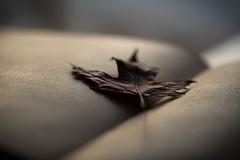 Still Life (Captured Heart) Tags: book pages singleleaf stilllife bestill rest findrest