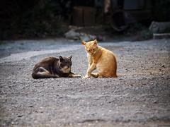 Street cat 188 (Yalitas) Tags: cat cats кот кошка котка kedi chat feline kat katze katzen kot kotka pet felino kottur katte kass kitty gato kocka gatta katzchen canon streetcat orangecat redcat