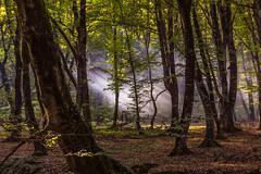 Magic light (emilqazi) Tags: ismayilli azerbaijan forest woods tree sunlight light landscape travel rays nature green leaves