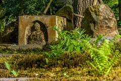 Green Zen Attitude (Mike Y. Gyver ( Organize in Albums)) Tags: zen art artwork green garden goldenhour travel europe exploration emotion imagination outdoor colors cligendael japanese japonais jardin paysage mygphotographiewixsitecommyg2017 myg nikon nikkor18105 d90 dof dephtoffield dream vert netherlands