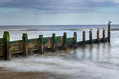 The Watchmen. (Andy Bracey -) Tags: bracey andybracey southwold suffolk spring coast coastalwater waterside waterfront sea seaside groynes breaker waves landscape seascape longexposure littlestopper leefilters nikon gulls seagulls birds thewatchmen england greatbritain reflected reflection