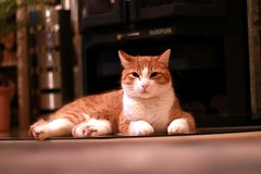 #Hobbyfotografie #Hobbyfotograf #Katze #Cat #rot #Tiere #Canon #blickwinkel (nicolewenzel) Tags: hobbyfotografie hobbyfotograf katze cat rot tiere canon blickwinkel