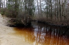 Wharton State Forest (elisecavicchi) Tags: mullica bog iron red reflection forest wharton state pine barrens pinelands new jersey nj southern april spring shore inlet sand shallows bend