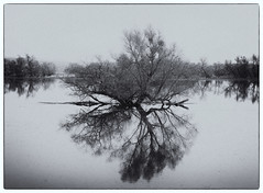 Nationalpark Unteres Odertal (Sciurus vulgaris) Tags: brandenburg wandergruppe baum spiegelung spiegelbild oder odertal nationalpark sw bw wasser
