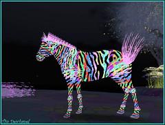 Zèbre © Fuschia Nightfire (Tim Deschanel) Tags: life color art happy tim day dove fuschia sl zebra second oh rez rhode couleur bryn deschanel thedove zèbre nightfire rezday