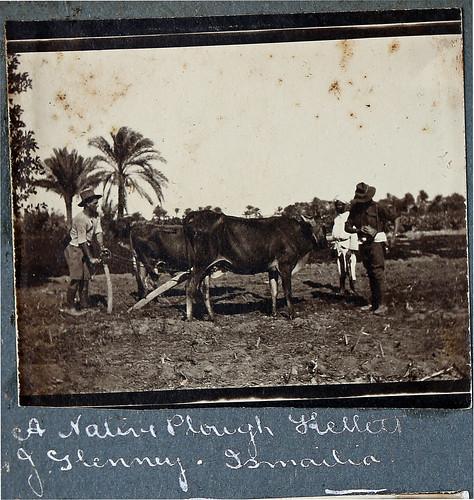 album palestine photograph wallace ww1 greatwar anzac sergeant illawarra gerringong sharpe kiamalibrary 6thlighthorse 16threinforcement