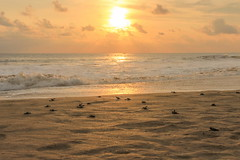 Menuju Laut | Ujung Genteng, Sukabumi