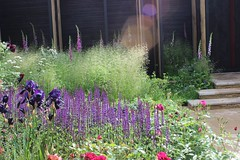 IMG_1819 (Carolyn Willitts) Tags: garden design chelsea 2014 chelseaflowershow cloudybay showgarden