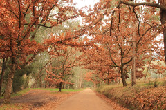 Bakers Gully, Bright (clairemhagan@y7mail.com) Tags: autumn trees winter red summer orange colour nature beauty landscape outdoors spring colours seasons natural bright australia victoria vic naturalbeauty northeastvictoria