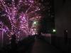 3880 Pink Illumination (mari-ten) Tags: autumn tree fall nature japan lights tokyo nightshot illumination 日本 shinagawa 東京 紅葉 秋 kanto osaki eastasia 東京都 大崎 2011 品川区 ライトアップ 関東地方 201111 20111126
