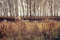 Closed/open (habeebee) Tags: trees brown texture field lines yellow vertical horizontal weeds hungary pattern view railway embankment magyarorszg veresegyhz