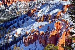 Hoodoos in a Snowy Landscape (Bryce Canyon National Park) (thor_mark ) Tags: trees nature utah unitedstates evergreen evergreens bryce brycecanyon day4 hoodoos snowylandscape brycecanyonnationalpark brycepoint project365 colorefexpro bryceamphitheater lookingne nikond800e easternedgeofthepaunsauguntplateau horseshoeshapedamphitheater
