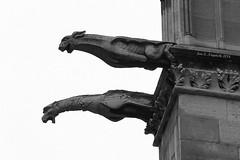 Gargoyles (Jan Nagalski) Tags: blackandwhite sculpture paris france history stone architecture spring architecturaldetail gothic may medieval gargoyle unusual gargoyles drainpipe chimera downspout notredamecathedral iledelacite historicbuilding chimere canon60d canon24105mmlens jannagal jannagalski