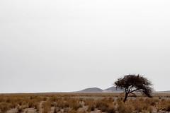 Necropolis. Desierto Dakhia. (Aysha Bibiana Balboa) Tags: canon rboles desierto atardeceres balboa marruecos necropolis etiquetas aysha bachir bibiana camellos desiertos 650d dakhia ayshabibianabalboa balboaflickrcanon