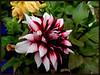 FLOWERS (Dhumketu_) Tags: hipbotunsquare