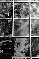 165/365 (local paparazzi (isthmusportrait.com)) Tags: windows shadow blackandwhite bw white black fern tree art blancoynegro blanco broken window glass lines rock contrast canon reflections square eos 50mm iso100 interesting pod shiny downtown shadows hole bright distorted framed f14 branches curves negro brokenglass steps smooth shapes highcontrast scene surface dirty minimal m holy shade ladder easy usm madisonwi shattered simple seen rectangle ef zigzag ziggy glassy dirtywindow brokenwindow 2014 simplistic isthmus zaggy canon50mmf14usm 50mmf14usm 365project danecountywisconsin canon7d localpaparazzi redskyrocketman lopaps isthmusportrait