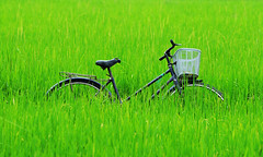 164578919_ Bicycle in the paddy rice field (phuong.sg@gmail.com) Tags: old blue wallpaper plant abstract blur green classic texture nature beautiful field grass bike bicycle wheel silhouette metal rural vintage garden season landscape asian design countryside leaf healthy asia alone pattern dof rice natural paddy farm vibrant background country grow meadow rusty tire fresh retro cycle frame vehicle shallow agriculture phuot
