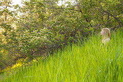 Makaela (austinspace) Tags: sunset portrait woman church field washington spokane dusk farm dancer blond blonde gogo wildflower magichour tridentine