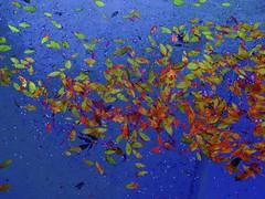 Water Feature#136 (maginoz1) Tags: winter june canon surreal australia vic waterfeature 2014 g16 bulla explored