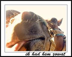 Samen pret (gill4kleuren - 12 ml views) Tags: horse me sarah fun gill saar paard haflinger