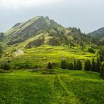 Lush landscapes