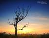 DALAM KENANGAN (alzikr) Tags: charity field sunrise landscape paddy sweet malaysia kampung kenangan terengganu dalam ramli sarip manir baloh