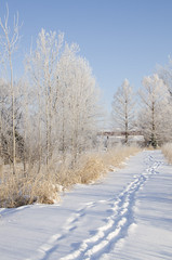 Path in Snow (Robin Arnold) Tags: winter snow cold landscape path hoarfrost footprints