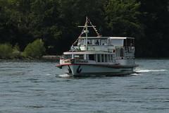 Kursschiff MS Stein am Rhein ( Schiff - Bateau - Ship ) unterwegs auf dem Rhein ( Fluss - River - Hochrhein ) zwischen D.iessenhofen und S.chaffhausen im Kanton ... in der Schweiz und Deutschland (chrchr_75) Tags: rio juni ro river schweiz switzerland europa barco ship suisse swiss fiume rivire reno christoph svizzera bateau fluss rhine rhein schiff strom rin rijn skib  2014 schip rivier  suissa joki rzeka schiffahrt 1406 flod rhin chrigu alus  fartyg passagierschiff kursschiff rhenus  chrchr hurni chrchr75 chriguhurni kursschiffahrt passagierschiffahrt albumschweizerkursschiffe chriguhurnibluemailch albumrhein juni2014 hurni140623
